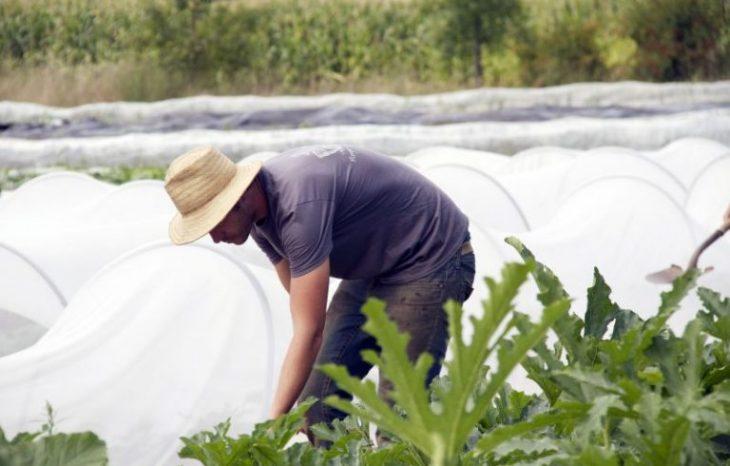 L'agroalimentaire dans Brome-Missisquoi : un moteur économique et identitaire