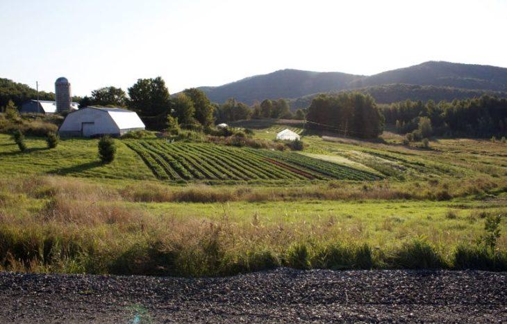 AGENT DE SOUTIEN AU DÉVELOPPEMENT AGROALIMENTAIRE